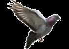 Απομάκρυνση περιστεριών και καθαρισμός χώρου από περιττώματα πουλιών