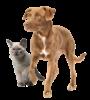 Απώθηση σκύλων, γατών, φιδιών